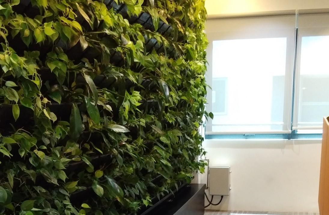 Full inner green wall   resized